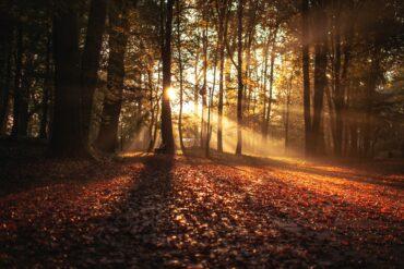 Herbstsongs gesucht